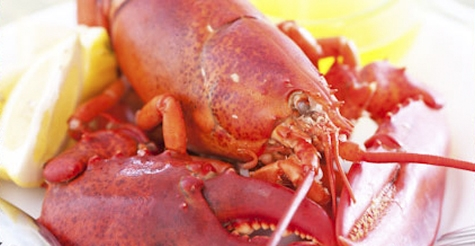 $75 for 4 live Maine lobsters